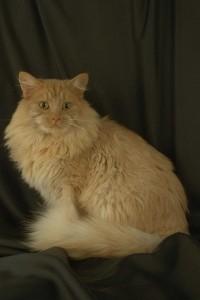 В Красноярске теперь можно брать кошек напрокат